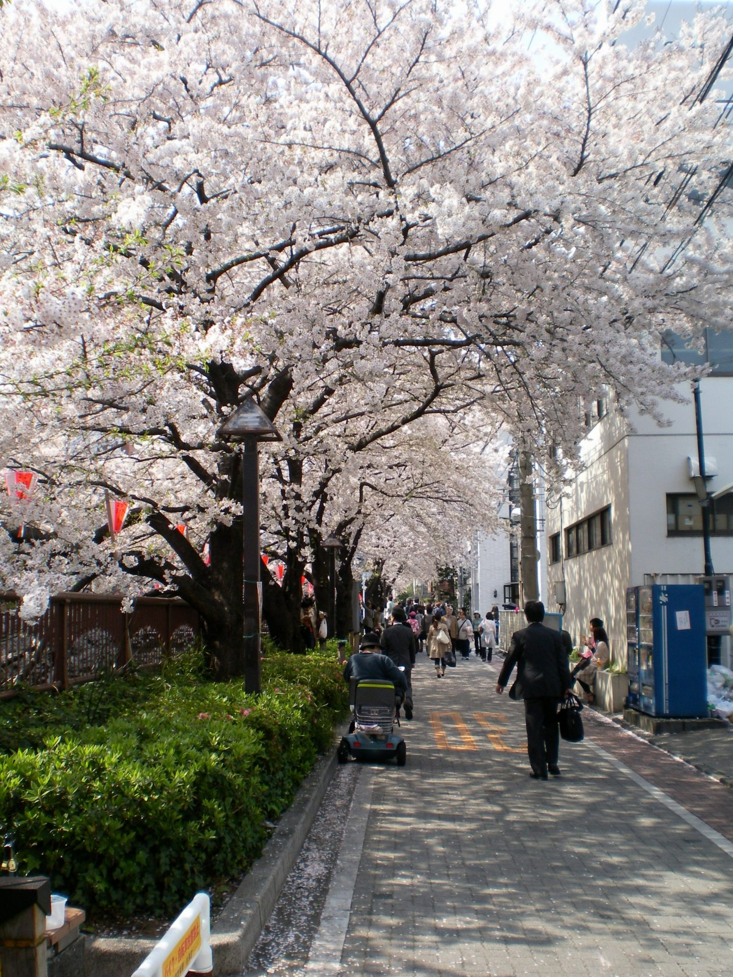 Nakameguro Kirschblüte