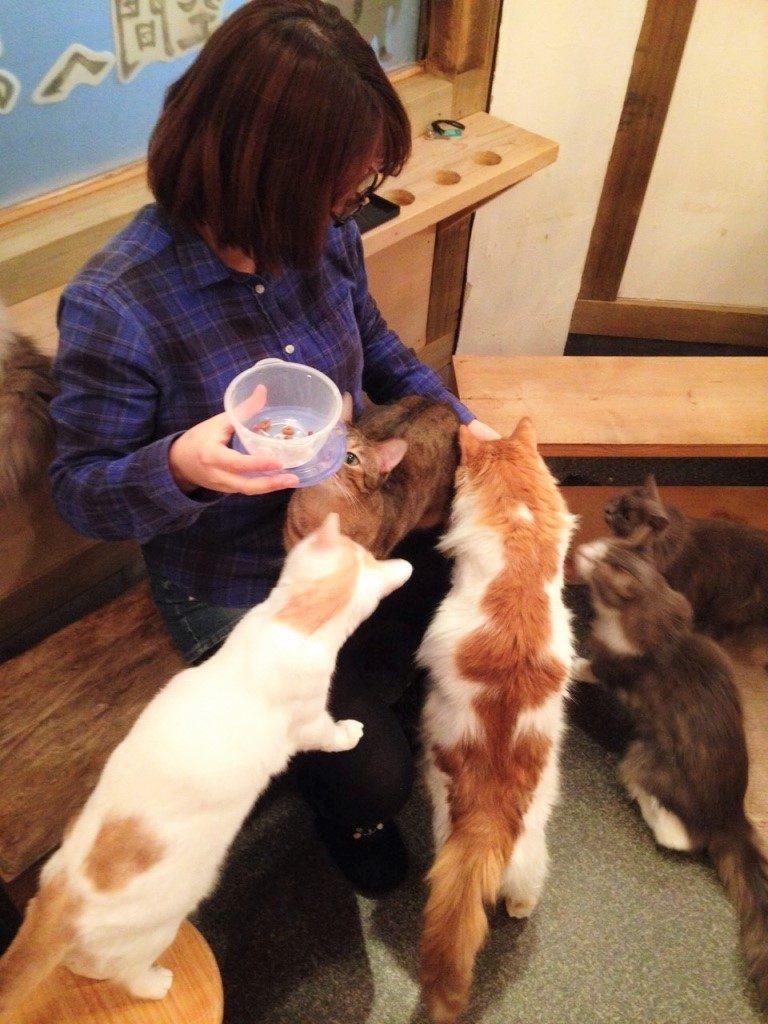 Katzenfütterung im Katzencafé