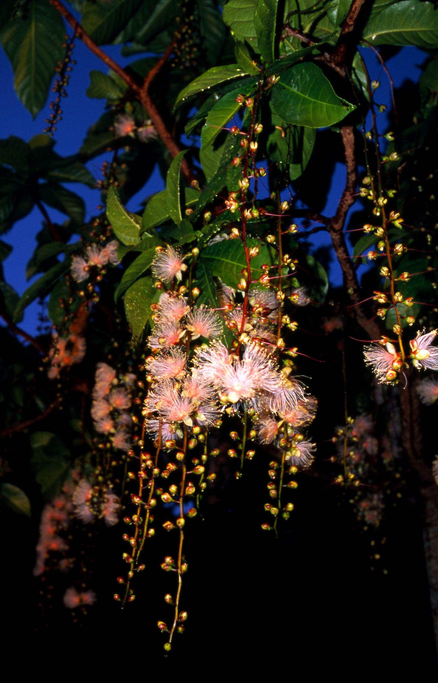 Pflanzen Okinawa