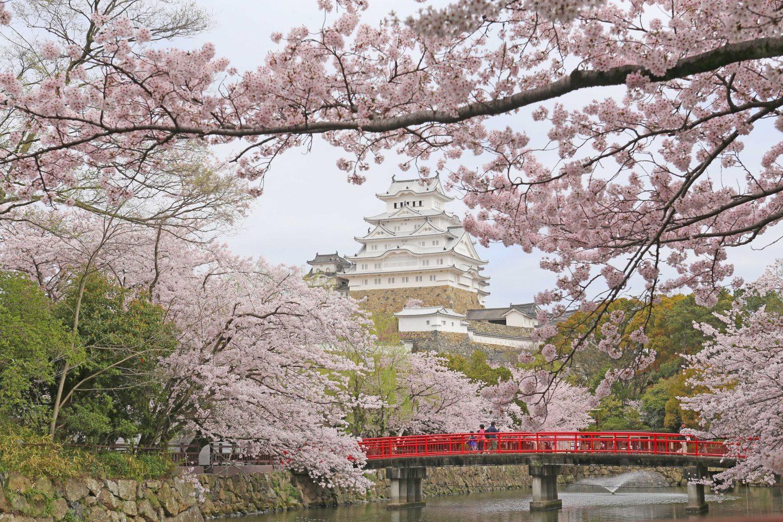 Himeji-jo Sakura