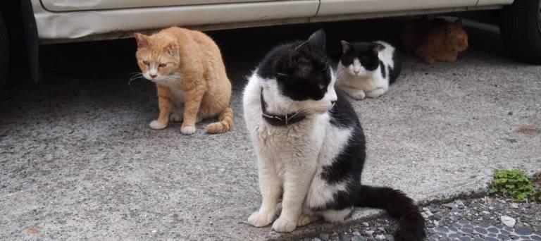 Straßenkatze Japan