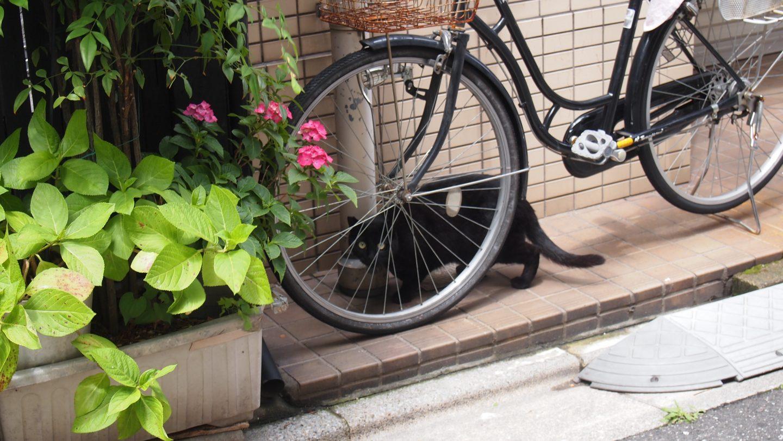 Katze Tokyo