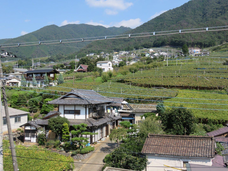 Wein Katsunuma