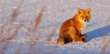 Fuchs Japan Hokkaido