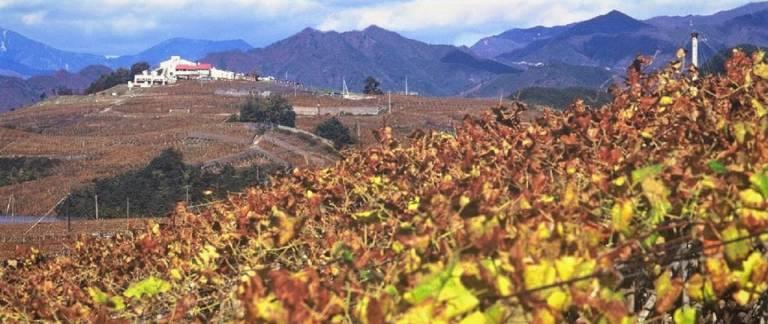 Wein Yamanashi Japan