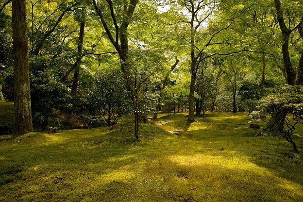 Moosgarten in Kyoto zur Regenzeit