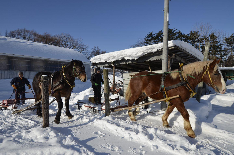 Hokkaido Schnee