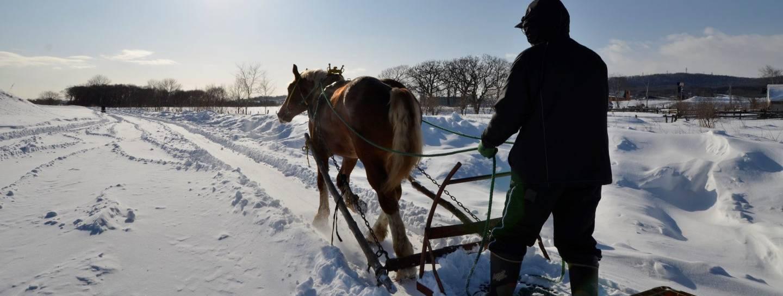 Schnee Japan Pferd