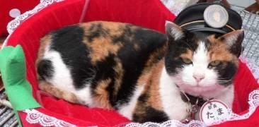 Tama Katze Japan