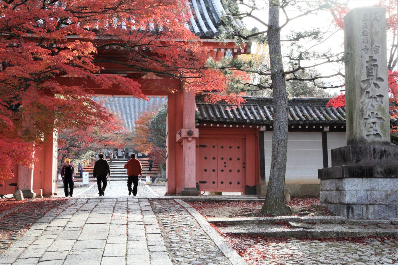 Hogon-tempel in kyoto mit Herbstlaub