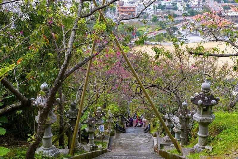 Kirschblüte Okinawa