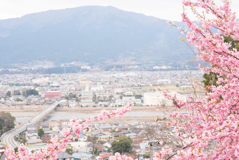 Kirschblüte Kawazu Japan