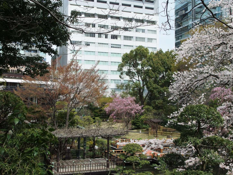 Togo-Schrein Harajuku Japan Kirschblüte