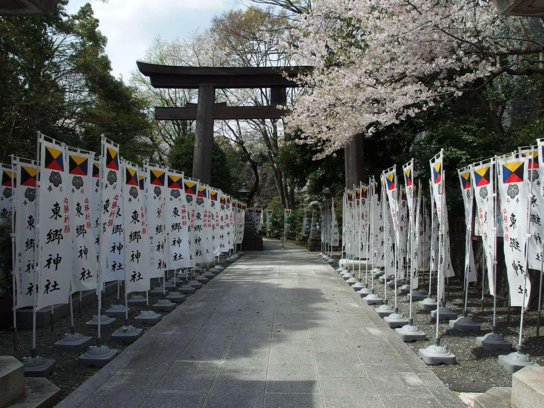 Kirschblüte Harajuku Japan Togo Schrein
