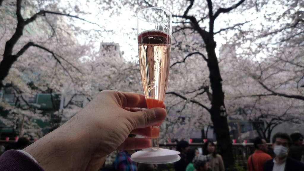 Kirschblüte Alkohol Trinken Sakura Hanami Japan