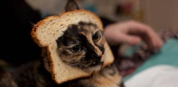 katze toast cat breading
