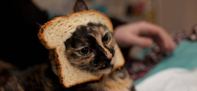 katze toast cat breading
