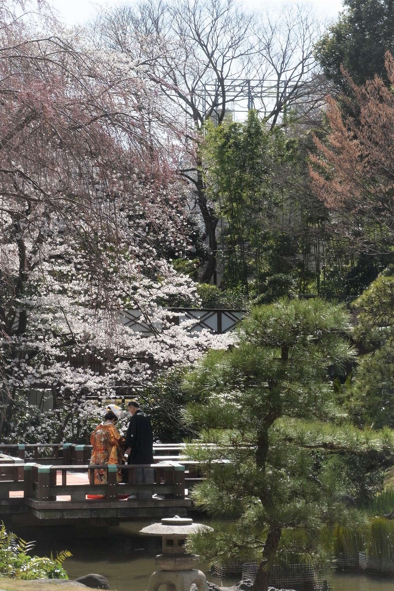 Harajuku Hochzeit Japan Kirschblüte Togo Schrein