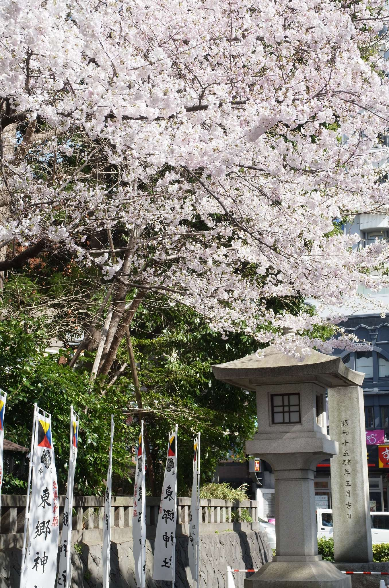 Kirschblüte Harajuku Togo Schrein Torii
