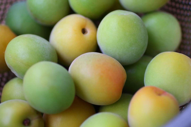unreife Ume Früchte