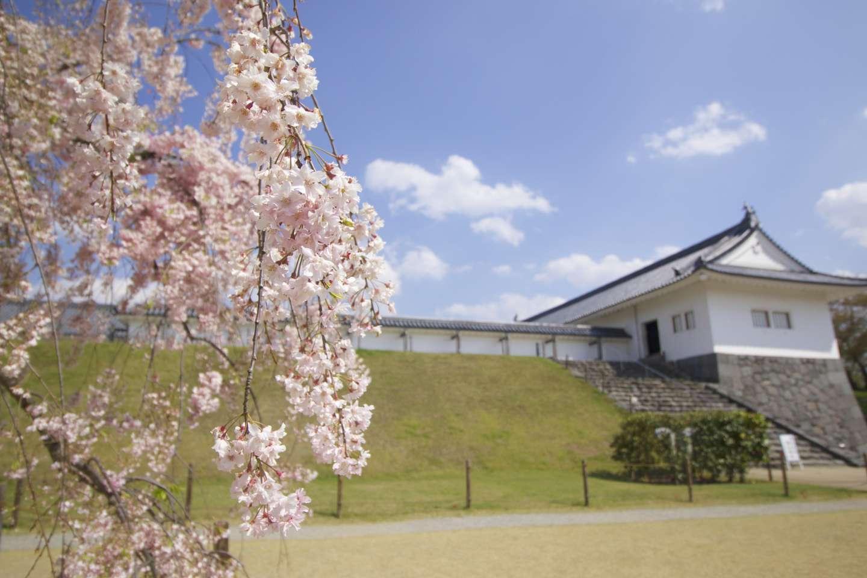 Blüten der shidare zakura mit japanischem Mauerwerk im hintergrund