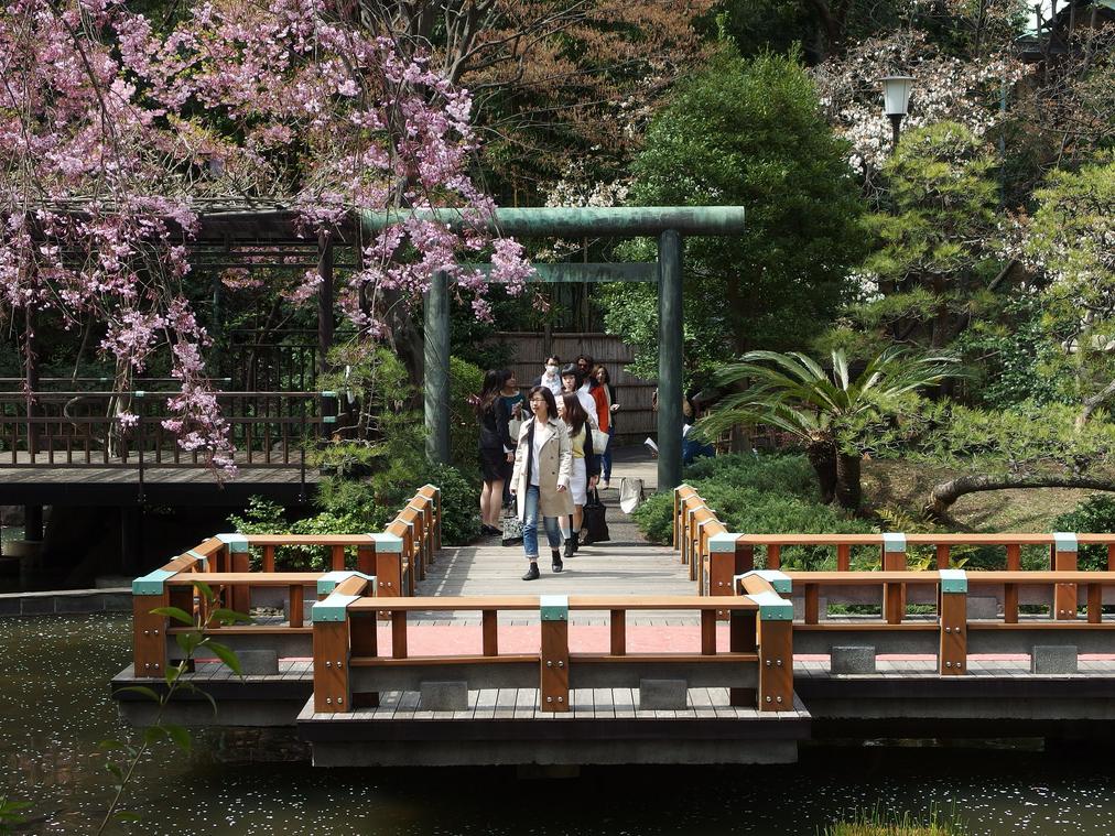 Harajuku Togo Schrein Shinto Kirschblüte