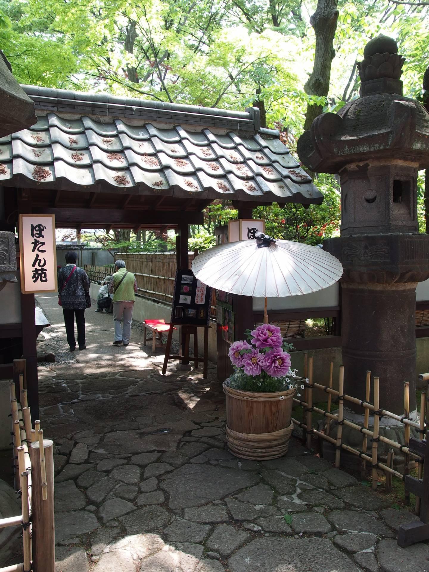 Pfingstrosen Japan Päonien Fest Ueno Tokyo Ueno-Park