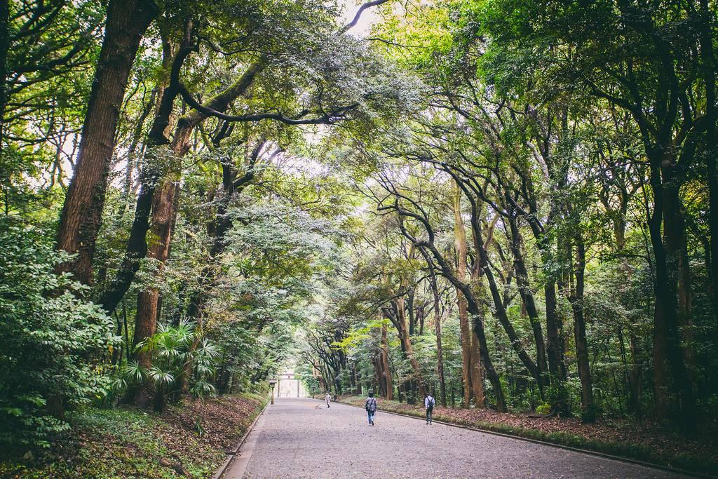 Top Ten Tokyo Sightseeing Meiji-Schrein