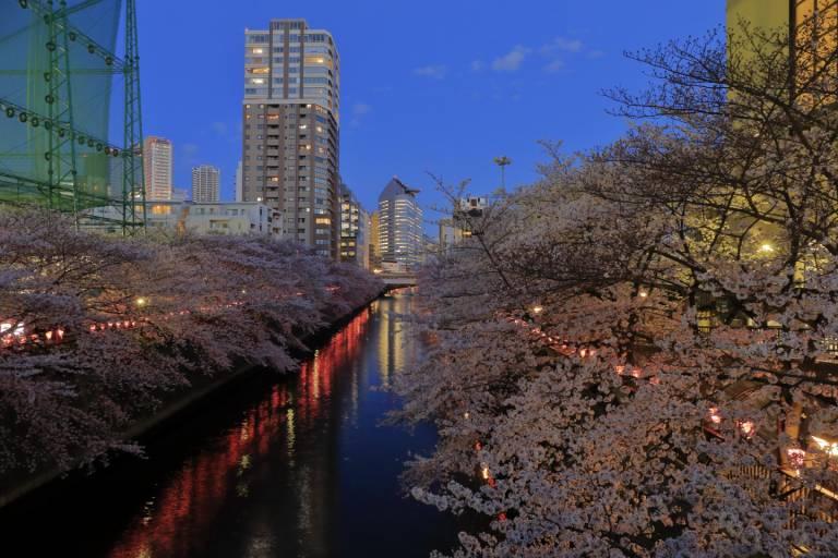 JTPA Japan Travel Photographers Association Kirschblüte Tokyo