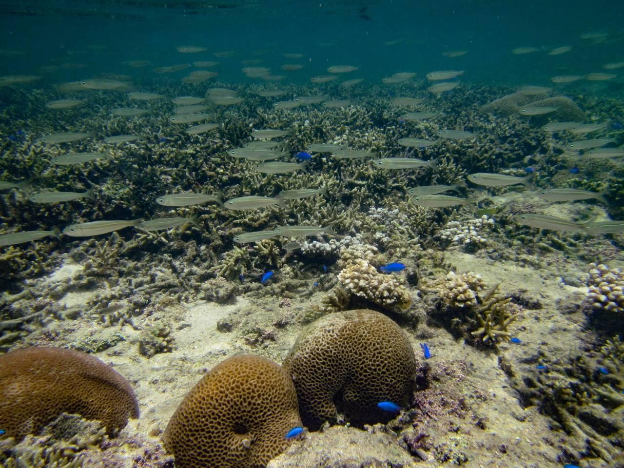Iriomote Yonaguni Okinawa Korallen Riff Schnorcheln Tauchen Fische Urlaub