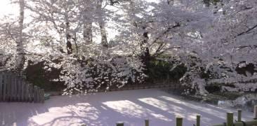 Kirschblüte in Hirosaki © Jennifer Romswinkel