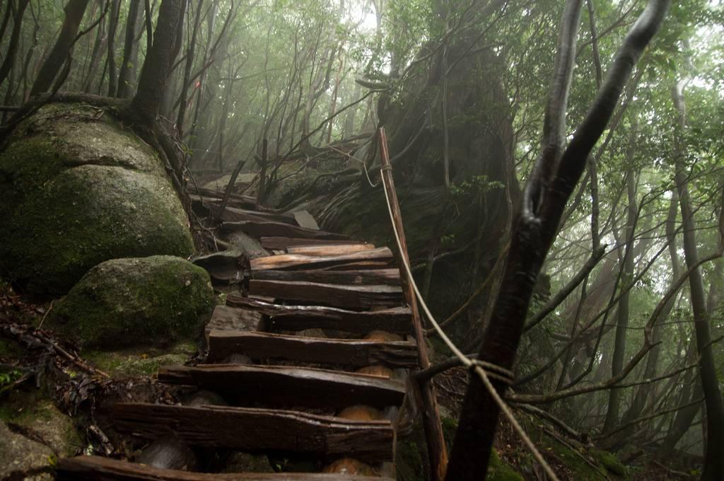 Wanderweg yakushima