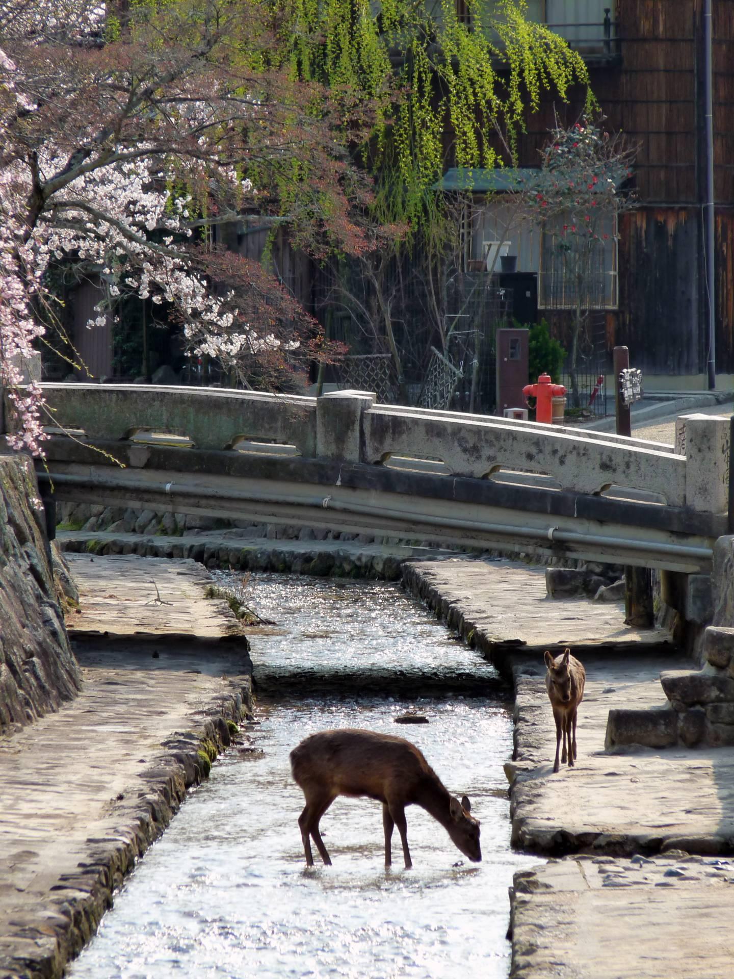 Rehe miyajima
