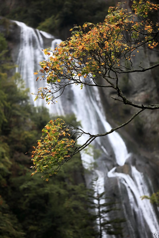 Hokkaido hagoromonotaki