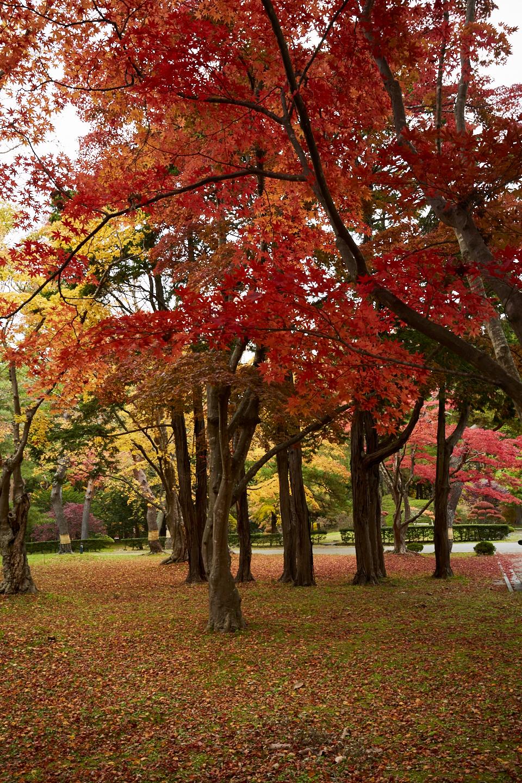 Hokkaido hakodateshi kousetsuen