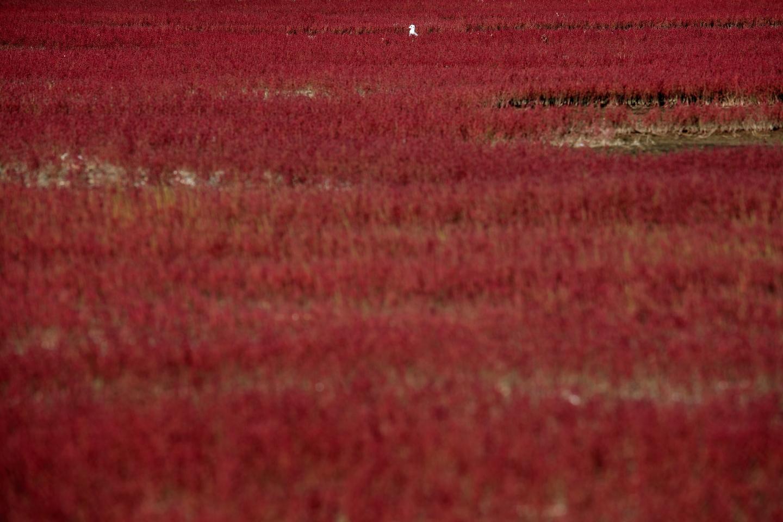 Hokkaido notoriko sangosou
