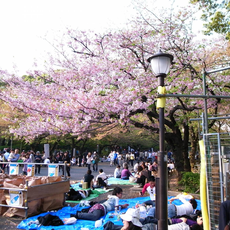 Hanami im Ueno Park