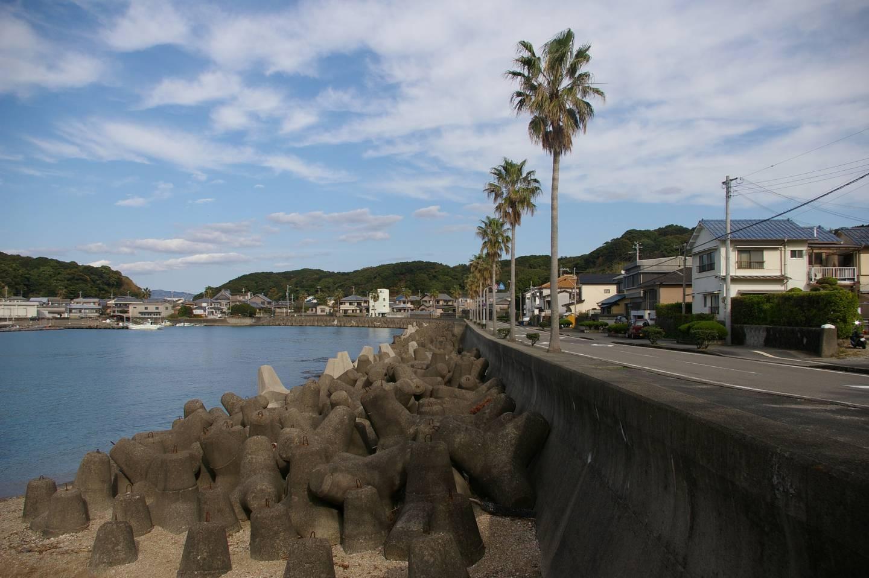 Palmen auf Nanki-Shirahama