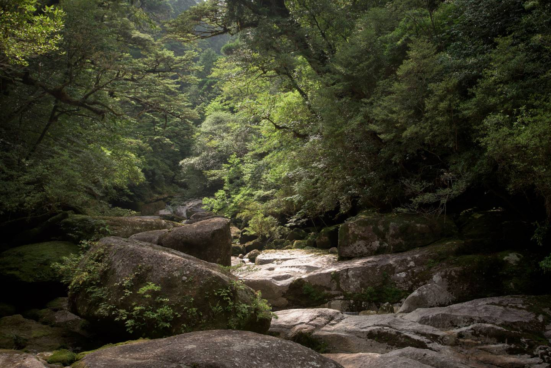 Wald auf Yakushima