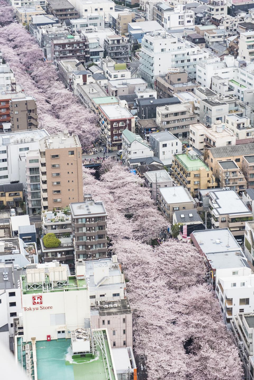 Tokyo Megurogawa