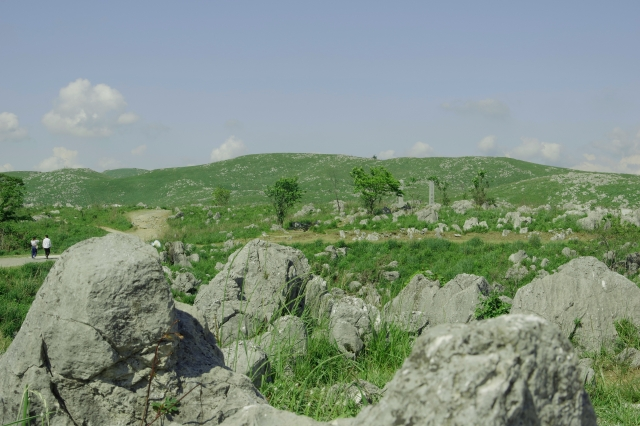 Sommerlich-grüne Wiese des Akiyoshidai
