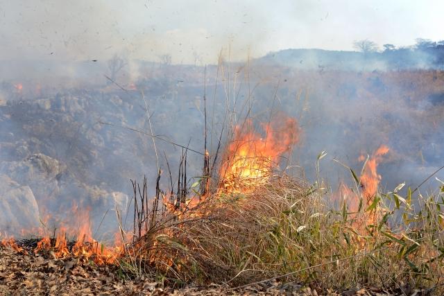 Bergwiesen-Verbrennung am Akiyoshidai