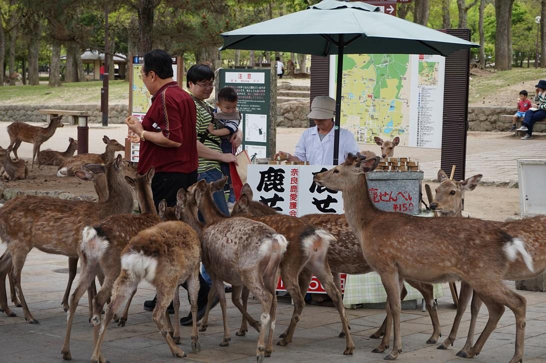 Hirschschar vor einem Keksstand in Nara