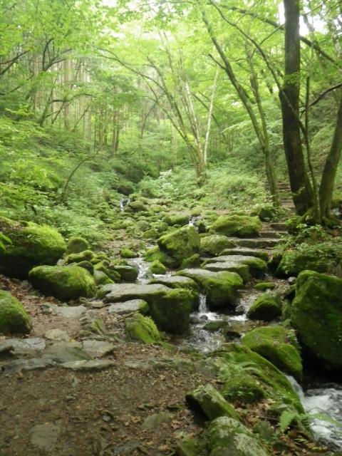 Bild eines Waldes mit Fluss und Moos