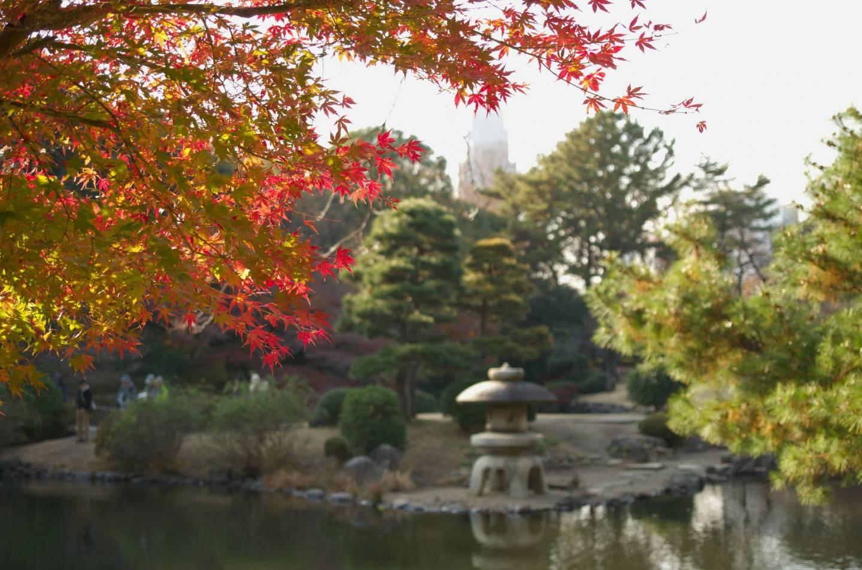 Der Japanische Garten im Shinjuku Gyoen.