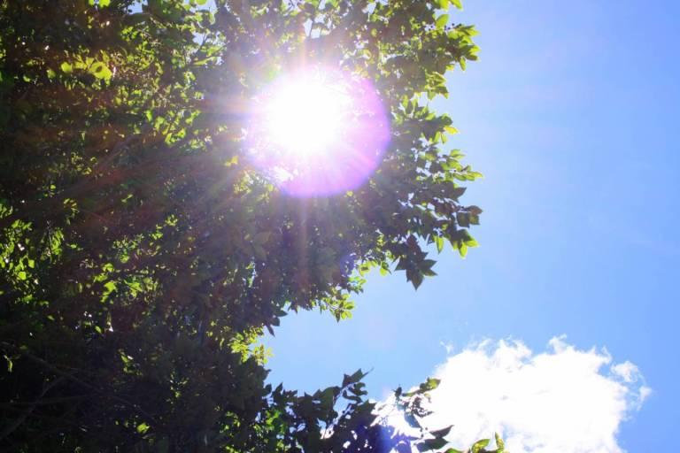 Sonne scheint durch Bäume