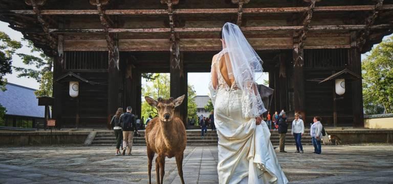 Braut in Nara mit Reh