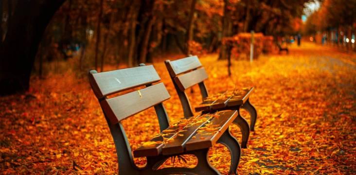 Tōkyōs abwechslungsreiche Herbstlaubfärbung verwandelt das ganze Land in ein regelrechtes Gemälde.