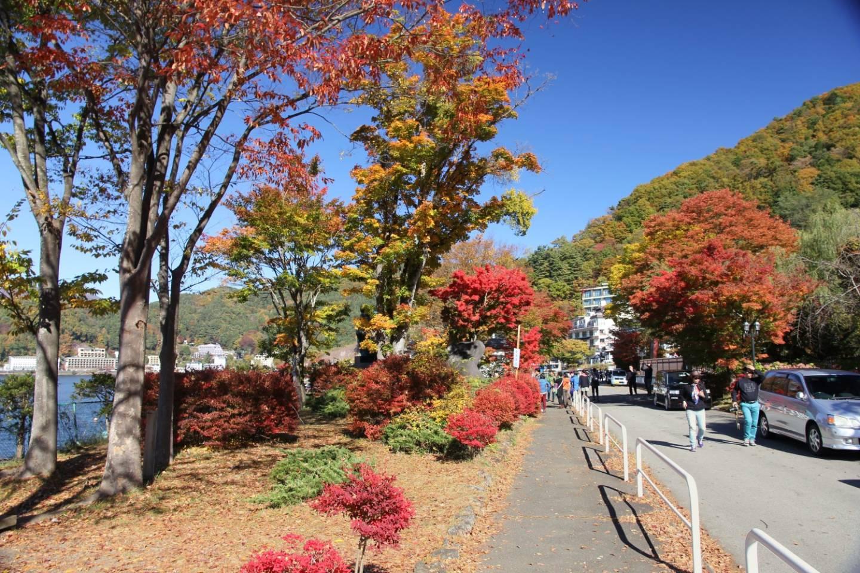 Herbstbäume am Parkplatz