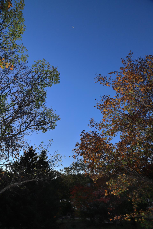 Restmond über Bäumen